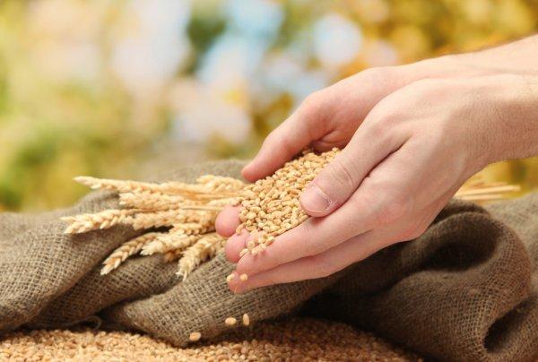 Корма для сельскохозяйственных животных и птиц, зерновые и крупы высокого качества и по ценам ниже рыночных